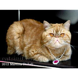 Morfeo, the lost & found red Persian