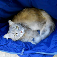 The Diary of a Cat Shelter Volunteer in Italy