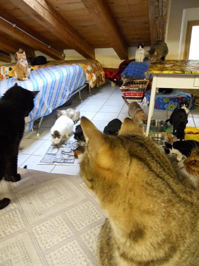 Free roam cats at Associazione Il Gattile (Trieste, Italy)