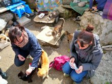 Romney House Rescue group. Spay/neuter campaign in Alghero. 2013