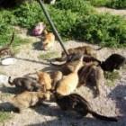 Sardinia, a Mediterranean island's striving animal welfare culture