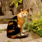 Stray? In Italy they're called 'Free Cats'